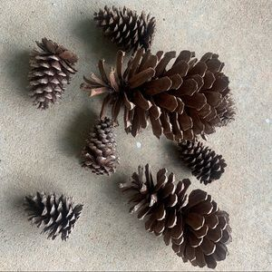 Other - Pine Cones for your Fall Decor. EUC